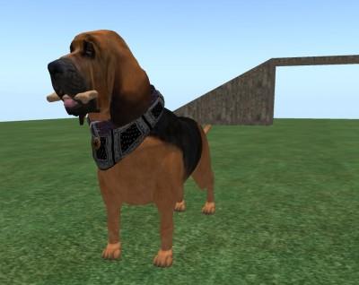 bloodachshoundog