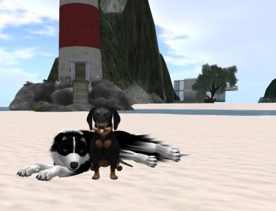 dog_and_dachshund_canis_beach