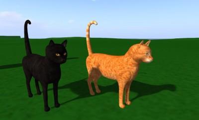 vkc_cats