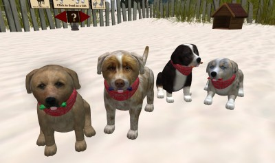vkc_puppies_canis_beach