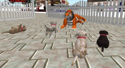 vkc_puppies_meet_a_tiger